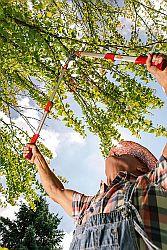 Foto von einer Astschere beim Baumschnitt